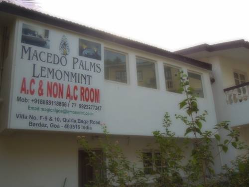 Macedo Palms Lemonmint