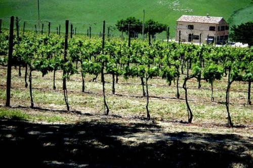 Holiday Home Montelipa Montecassiano